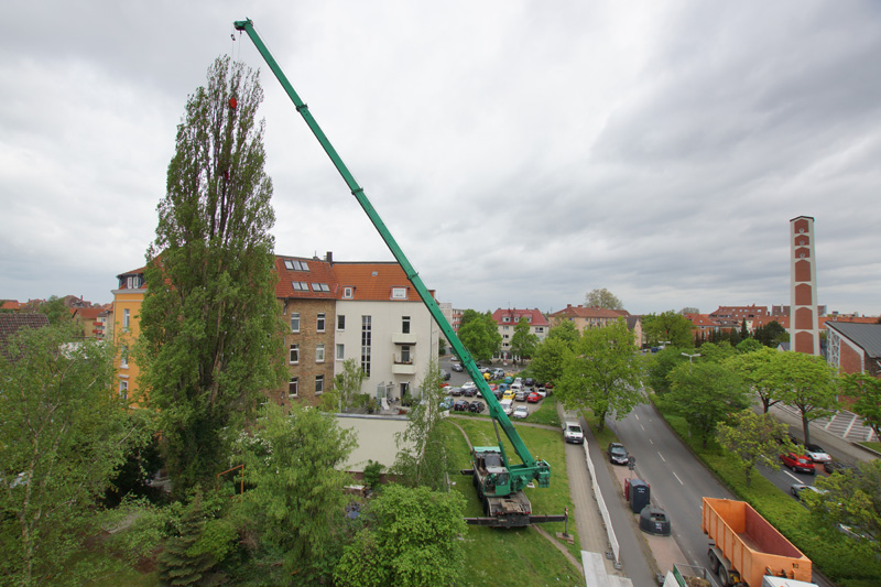 Klettergerüst Um Baum : Klettergerüst um baum tolle gartentipps rankgerüste und